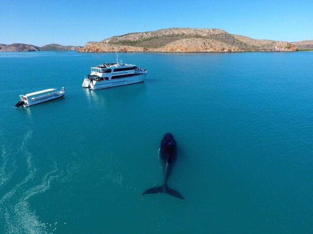 Odyssey Kimberley Cruises Whales