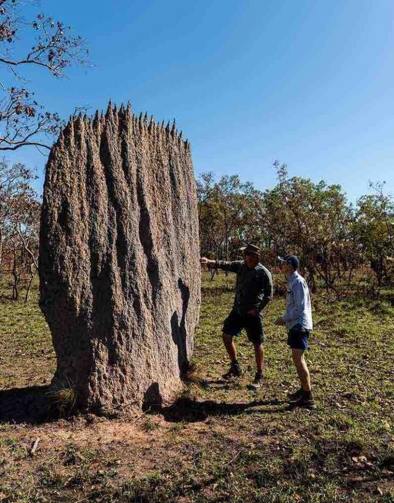Termite Mounds at Litchfield